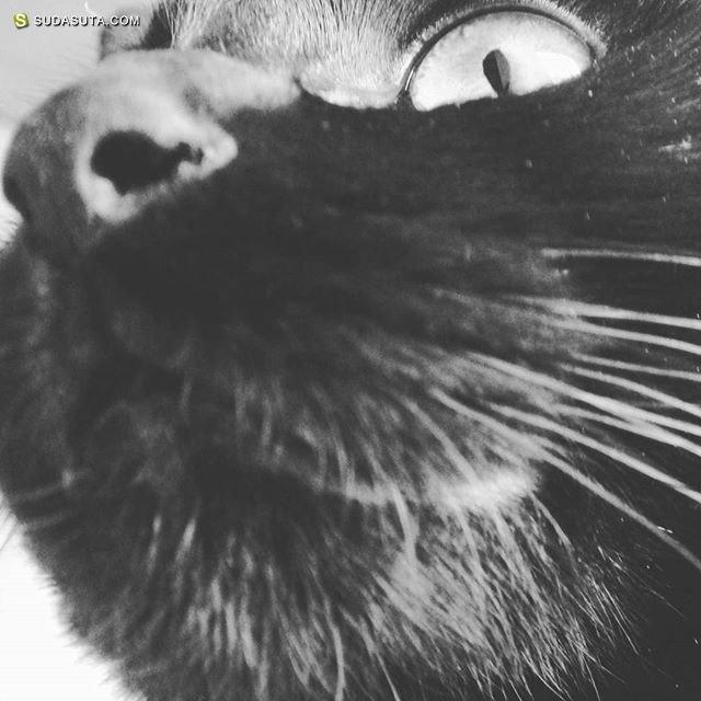Momo&Nana 两只黑猫的影像日记