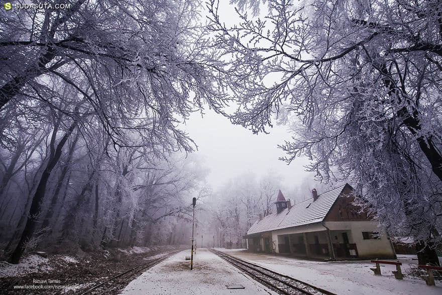 Tamás Rizsavi 冬日的魔法 自然摄影欣赏