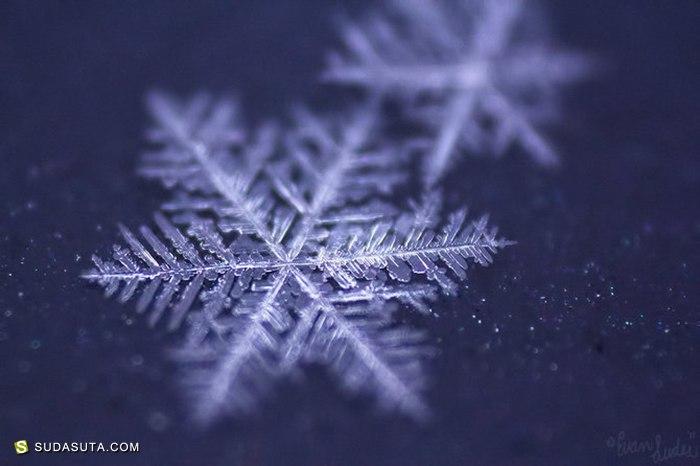 雪花雪花 微距摄影欣赏