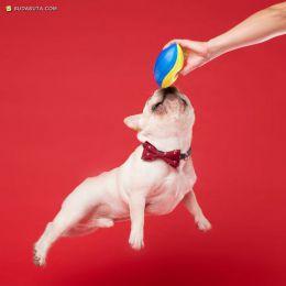 Kevin Sarasom 宠物摄影欣赏
