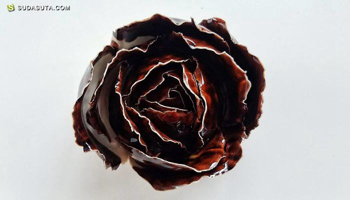 Owen Mann 陶瓷多肉植物