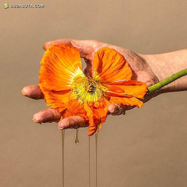 Suzanne Saroff 花的艺术