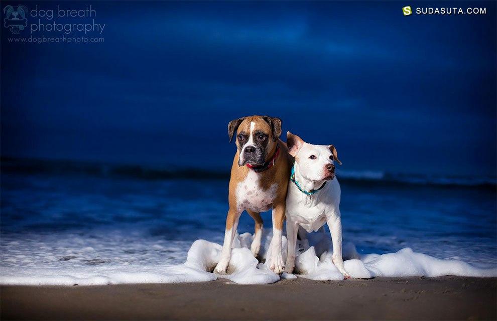 Kaylee Greer 汪星人宠物摄影欣赏