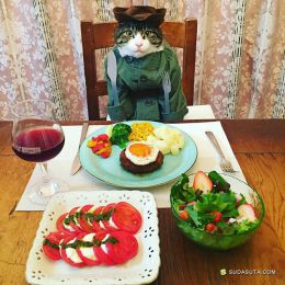 マロ 让看不让吃 喵星人宠物摄影