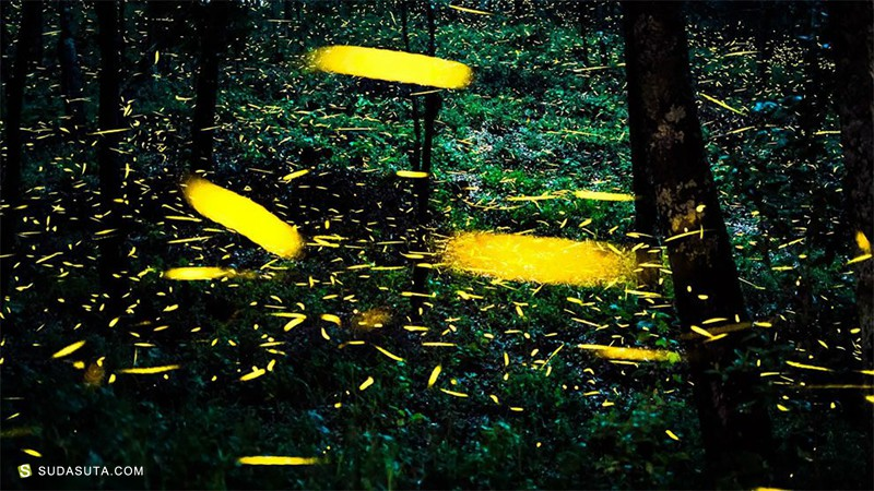 Sergio Robledo 墨西哥森林的童话般的萤火虫