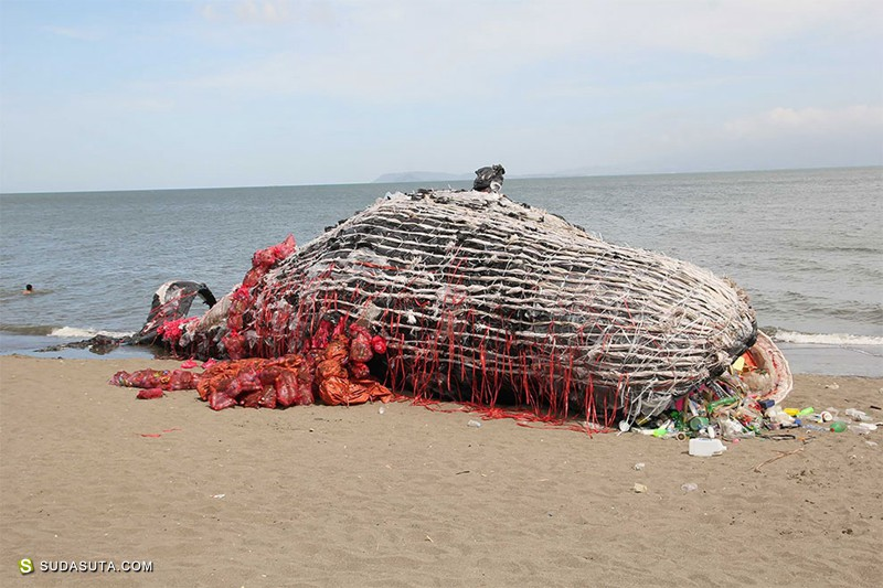 Greenpeace Philippines 浅滩的鲸鱼 装置设计欣赏