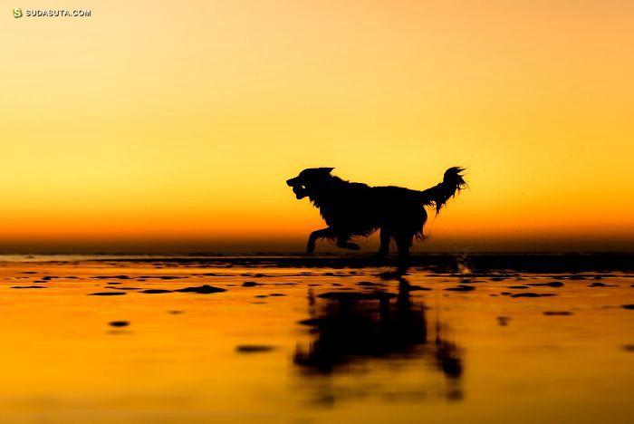 触动人心的汪星人宠物摄影欣赏
