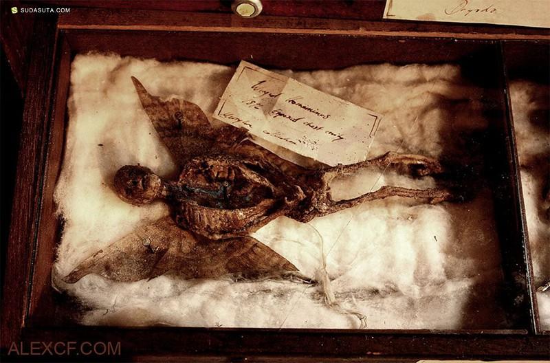 Thomas Theodore Merrylin 不可思议的生物标本
