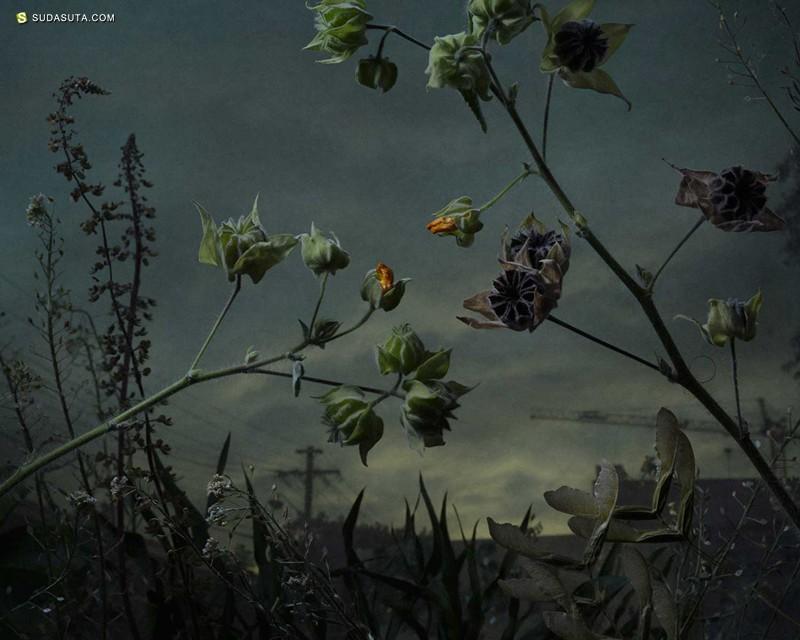 Botanical Inquiry 暗色的调子 自然的摄影