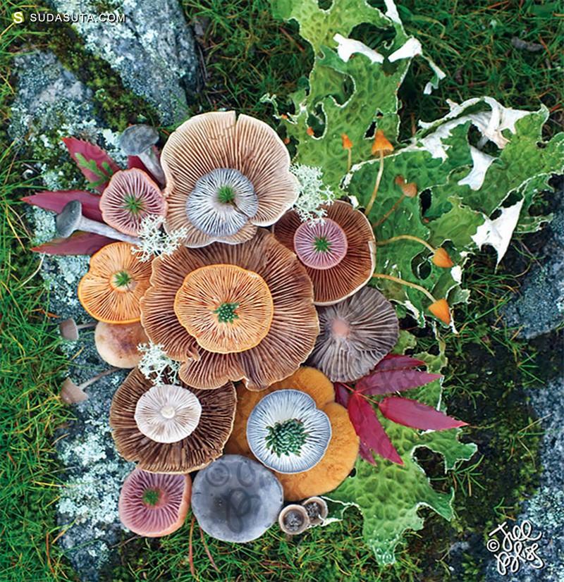 Jill Bliss 美丽的蘑菇 自然摄影欣赏