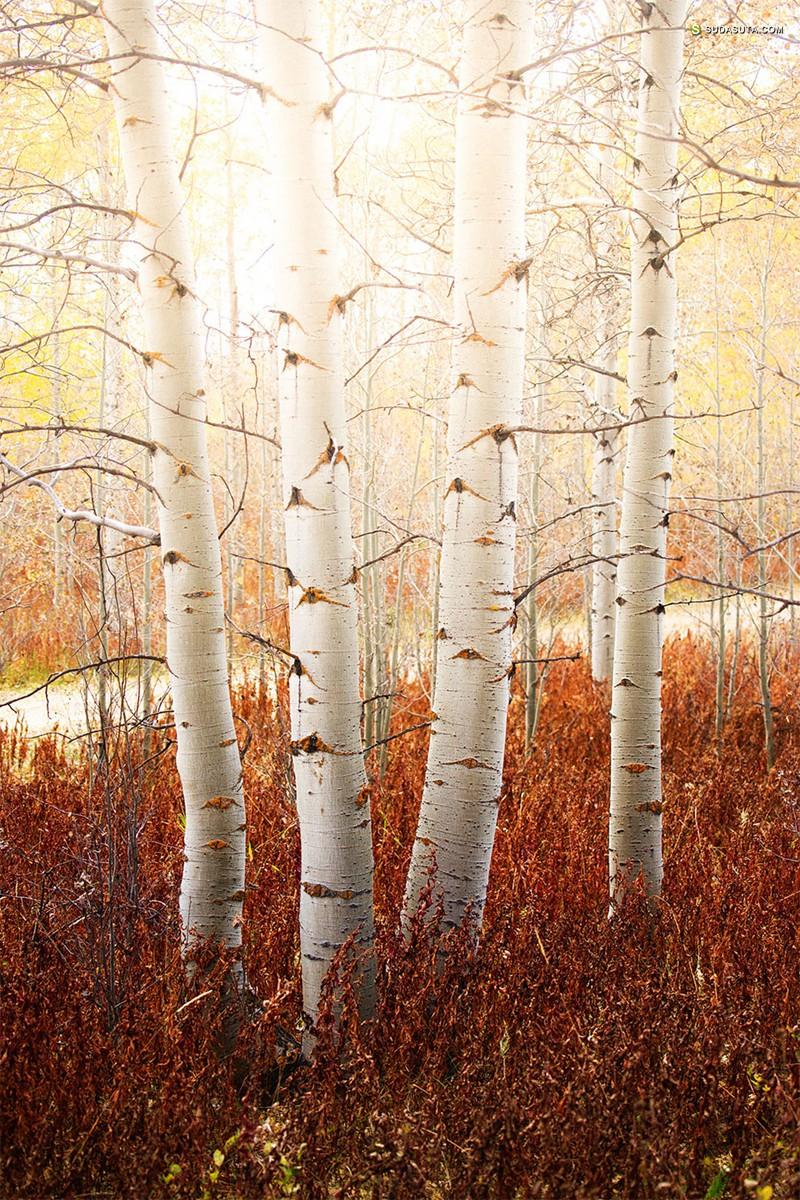 Miles Glynn 的秋天 数字艺术作品欣赏