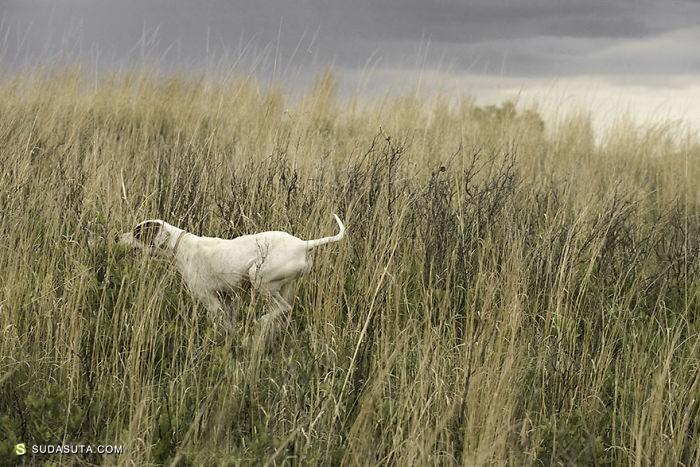 Nancy Le Vine 宠物摄影欣赏