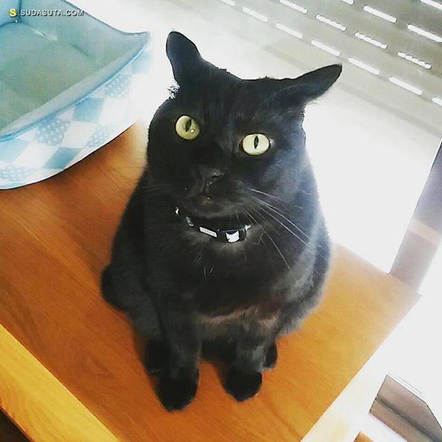 Neko Kanda 猫的写真与猫