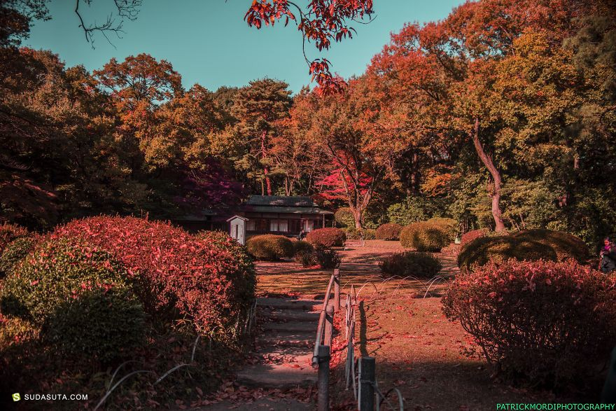 Patrick Ebu-Mordi 东京印象 旅行日记