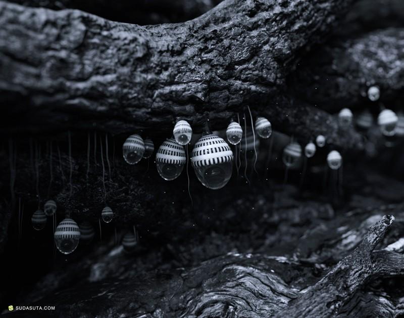 Zhang Chenxi 未名生物 不可思议之3D渲染