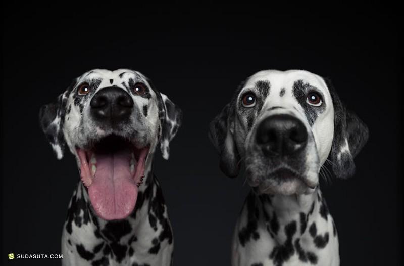 Duo Reveals 宠物摄影欣赏