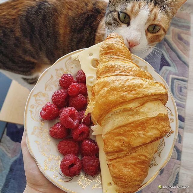 Mr.andMrs.Cat 猫咪与吃食 可爱有趣的小生活