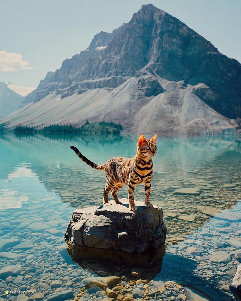 和Suki 一起旅行 喵咪旅行影像日记