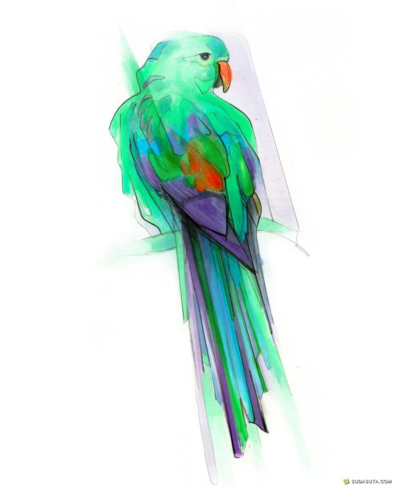 Alexis Marcou 手绘鸟类插画