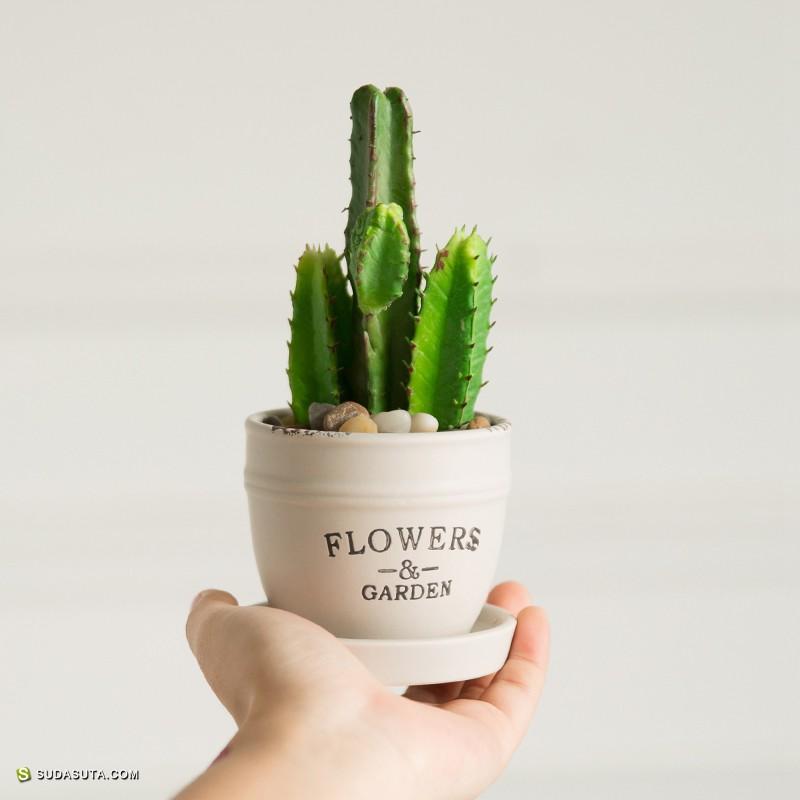 颜物 把绿色带回卧室 自然仿真花