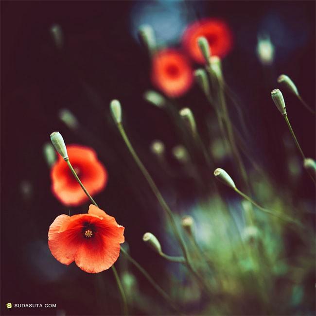 Barbara Florczyk 花朵艺术家