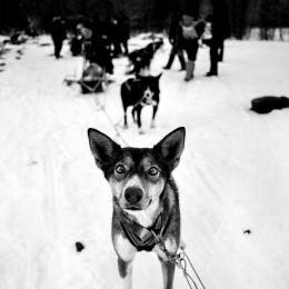 Alan Schaller 旅行摄影日记