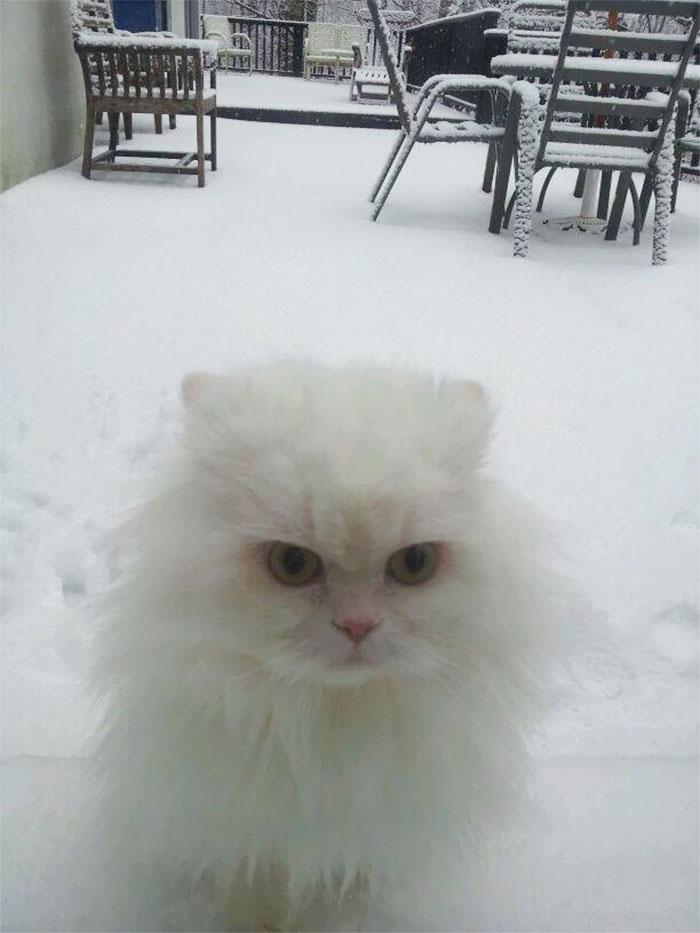 伟大的白色与萌蠢的你们!宠物摄影欣赏