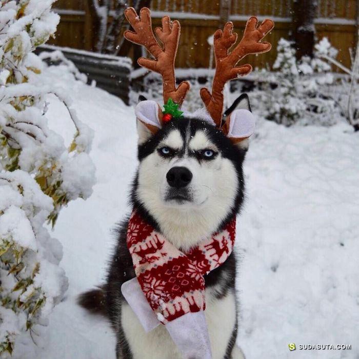 """Anuko """"不高兴""""的圣诞节"""