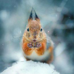 Joachim Munter 不可预见的镜头 动物摄影欣赏