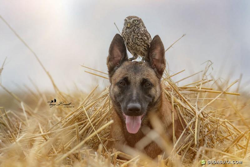Tanja Brandt 不可思议的友谊 宠物摄影欣赏