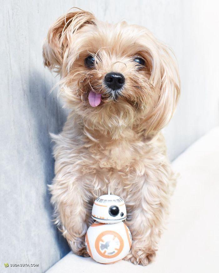 BringRooToo 宠物摄影欣赏