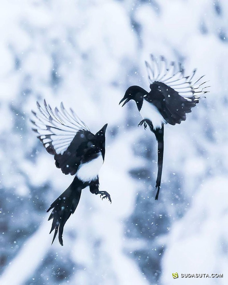 自然摄影师 Ossi Saarinen