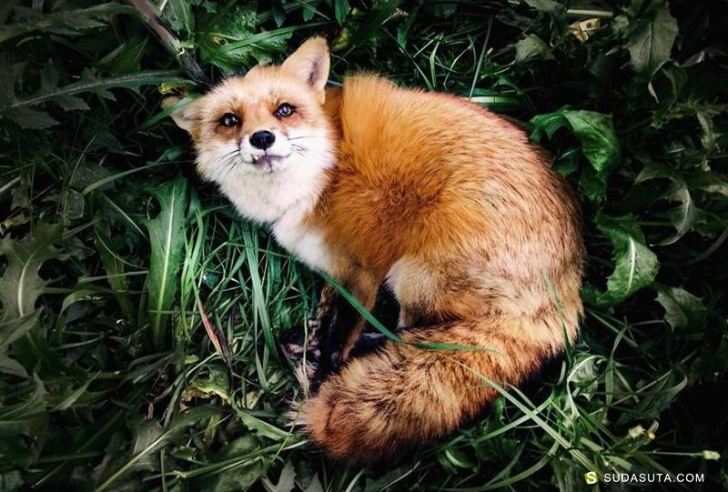 Jessika Coker 可爱的小狐狸