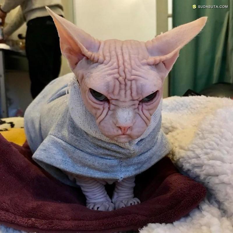 Loki 世界上最邪恶的喵