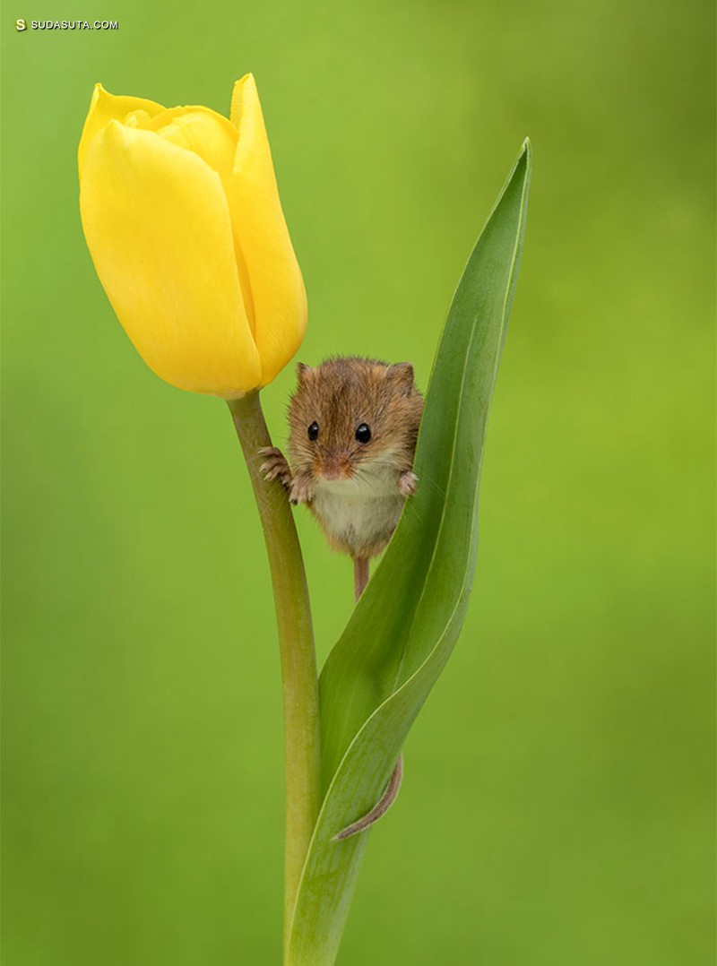 Miles Herbert 不可思议的花朵摄影