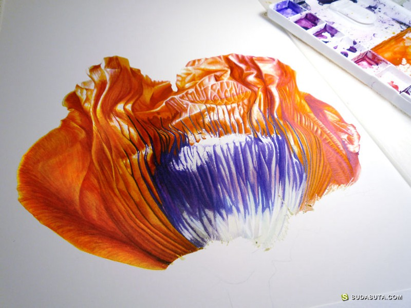 Denise Ramsay 花朵的绘画过程