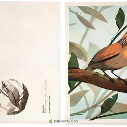 Eric Pautz 鸟