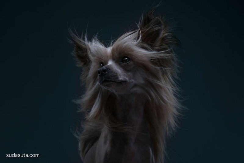 Alexander Khokhlov 宠物肖像摄影欣赏
