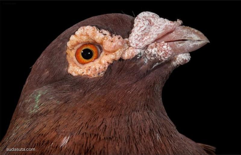Andrew Garn 鸟类肖像摄影欣赏