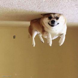 狗狗气球 主题宠物摄影