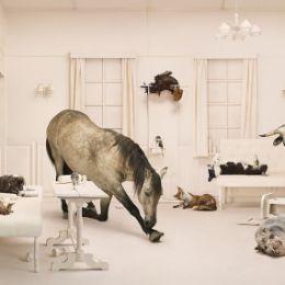 Frieke Janssens 超现实主义摄影作品欣赏