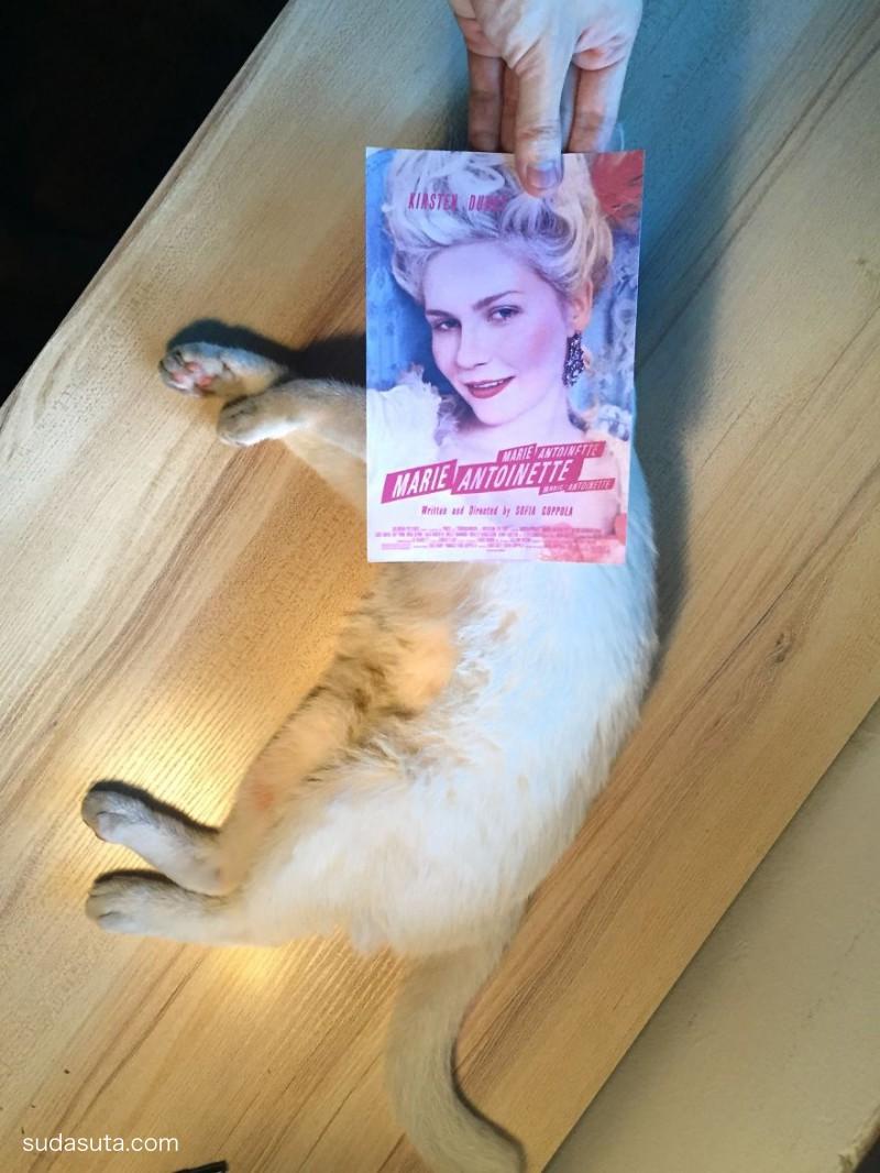 Jaemy Choong 猫咪与电影海报