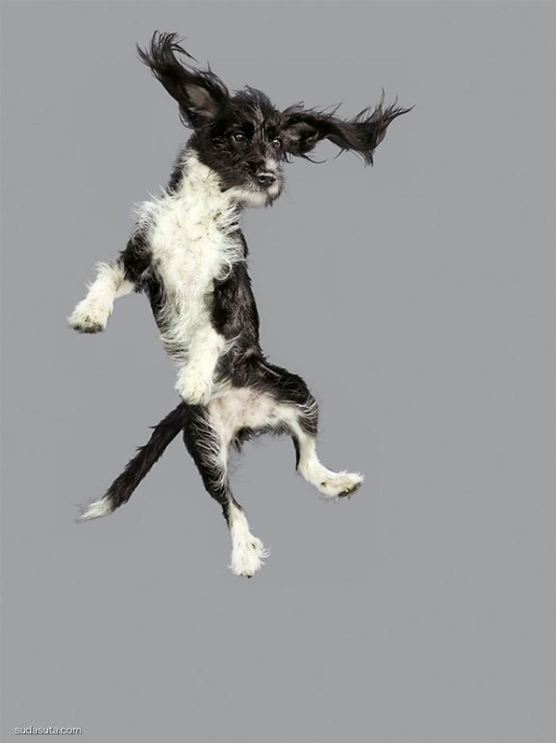 Julia Christe 飞行着的狗狗
