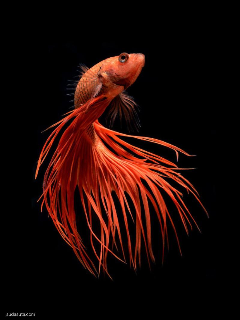 Visarute Angkatavanich 舞蹈的鱼
