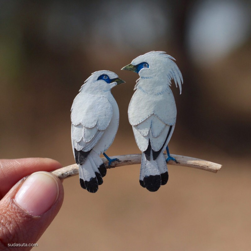 Nayan Shrimali 和 Vaishali Chudasama 鸟