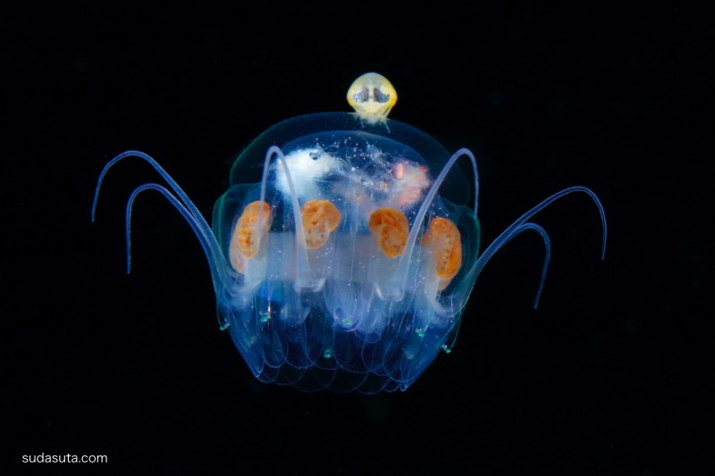 Ryo Minemizu 优雅的浮游生物