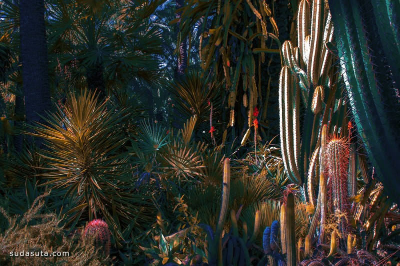 Al Mefer 植物的超现实主义 艺术摄影欣赏