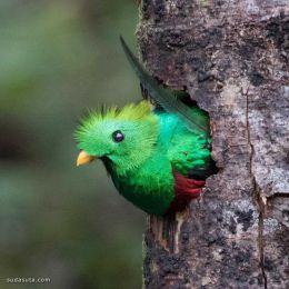 Alejandra Perez 鸟类摄影欣赏