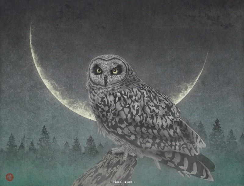 Takashi Kanazawa 细腻唯美的动物插画
