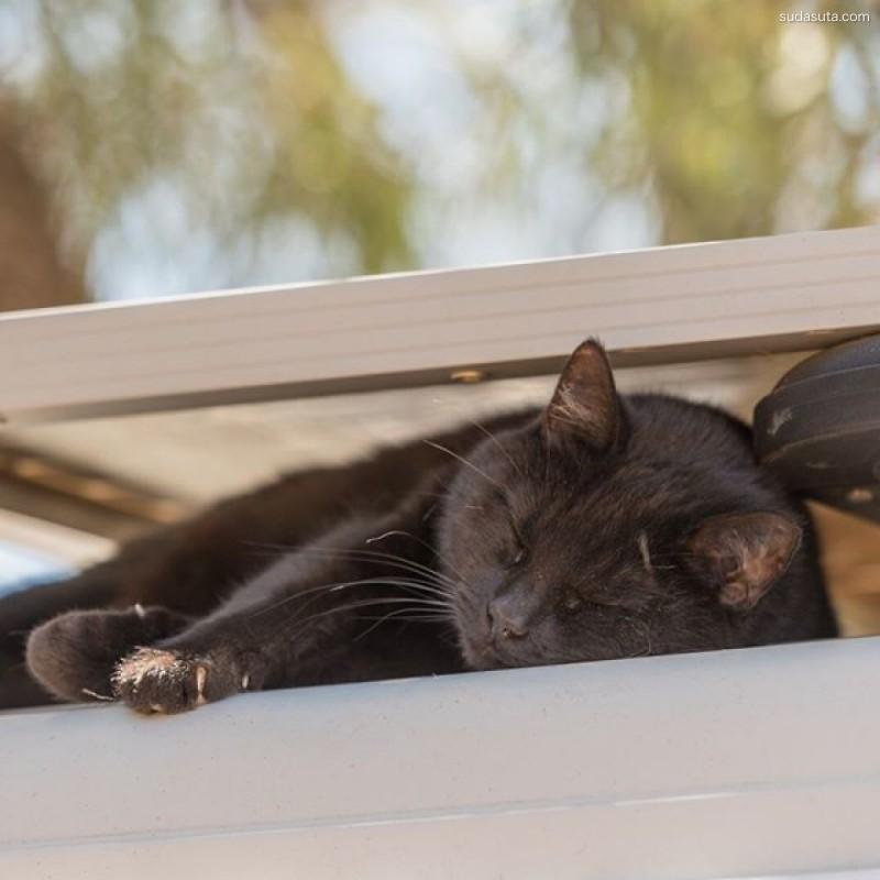 Rich East 带着黑猫去旅游